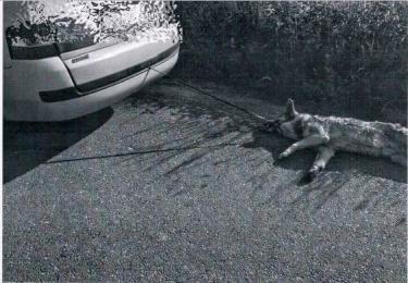 NIE REAGUJESZ - AKCEPTUJESZ: obronił psa przed właścicielem