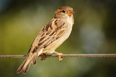 Ptasi Bufet – dokarmiaj nie szkodząc